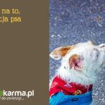 7 dowodów na to, że socjalizacja psa jest ważna