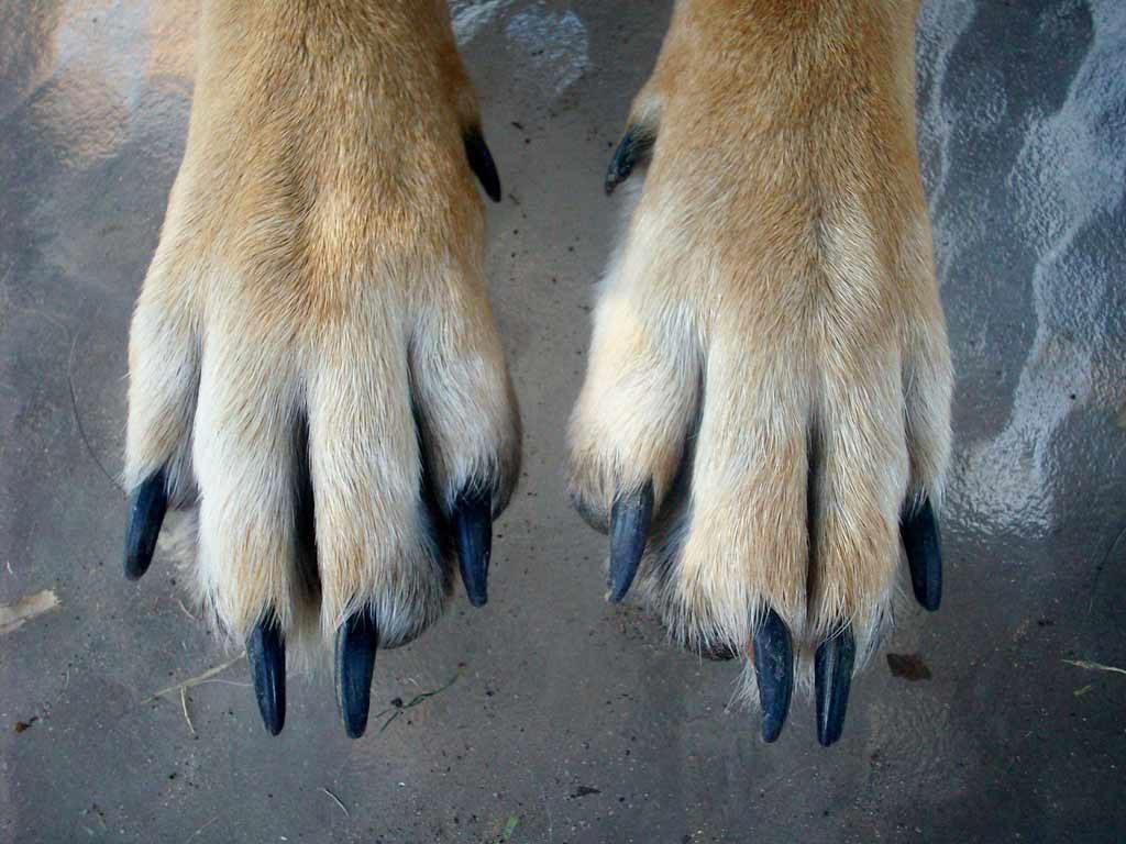 przycinanie pazurów psa
