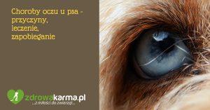 Choroby oczu u psa – przyczyny, leczenie, zapobieganie.