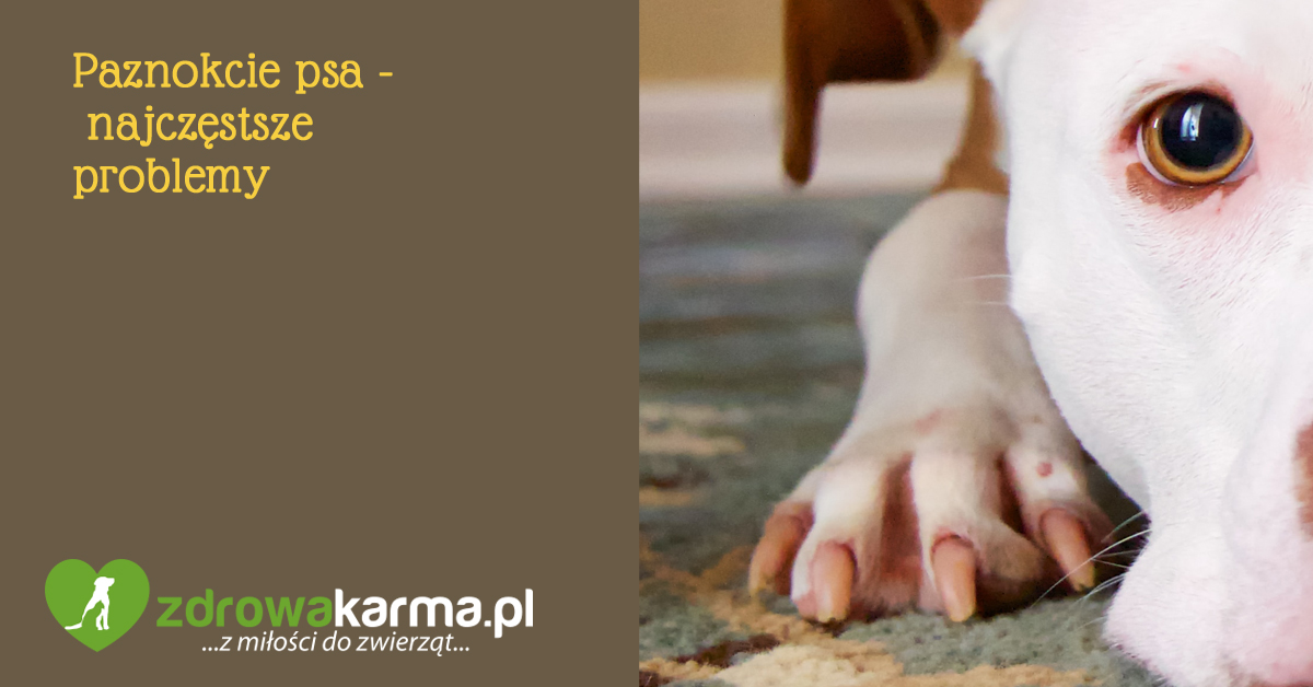 paznokcie psa