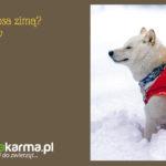 Jak dbać o psa zimą? – 7 sposobów