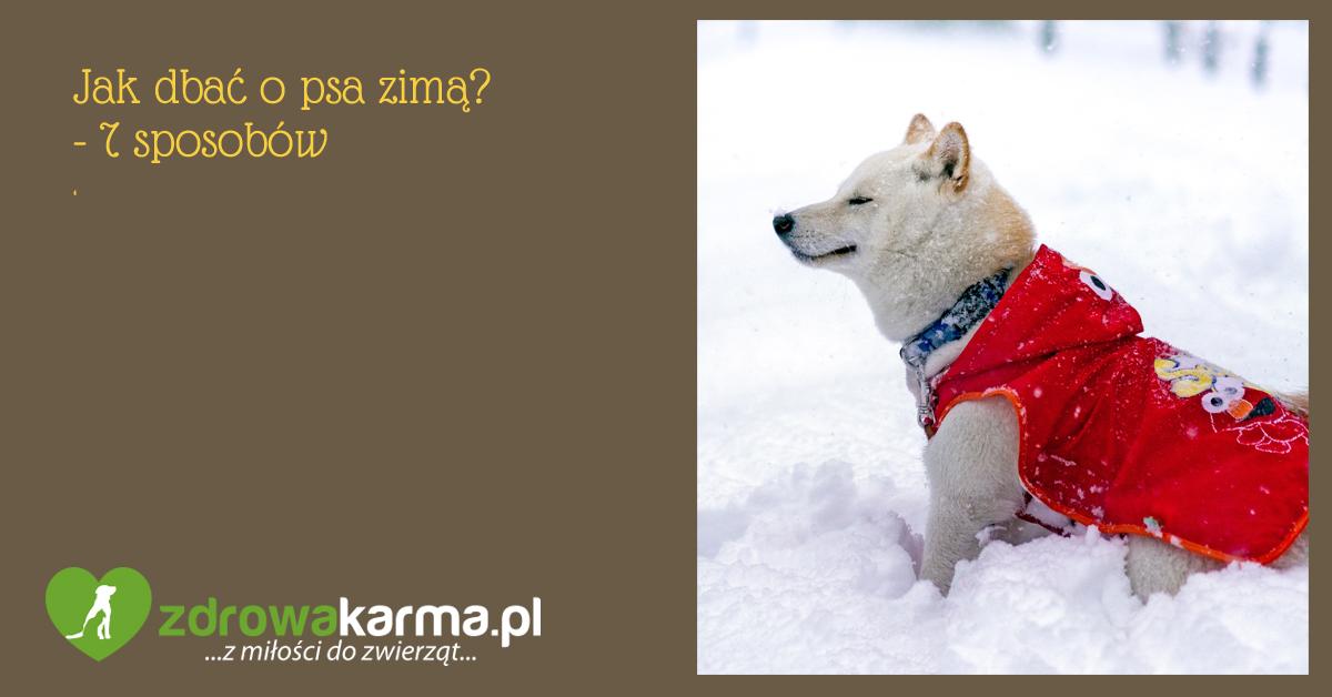 jak dbać o psa zimą 1
