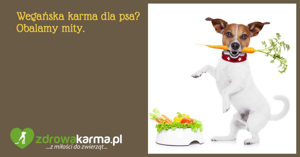 wegańska karma dla psa