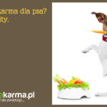 Wegańska karma dla psa? – obalamy mity.