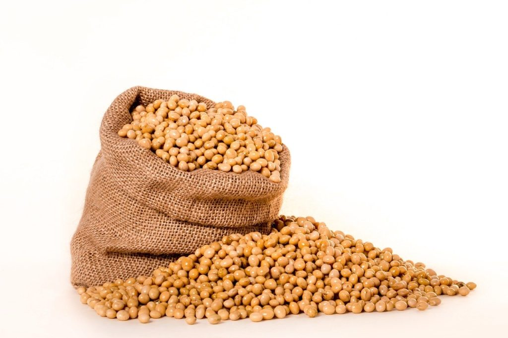 soybeans 2039642 1280