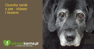 Choroby nerek u psów – objawy i leczenie