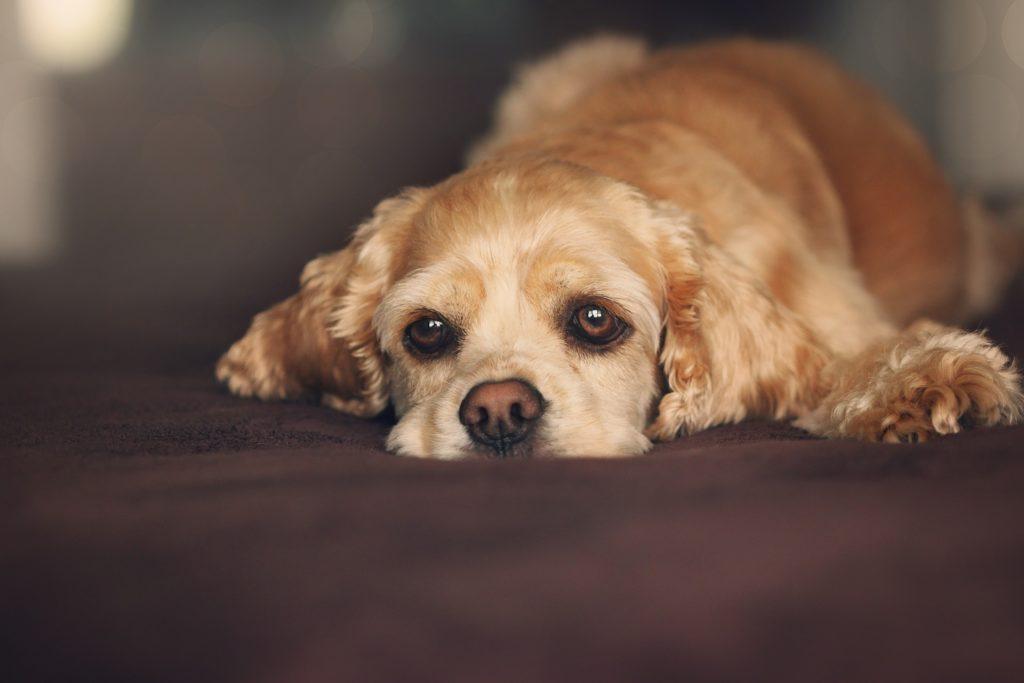 gdy pies choruje na nerki