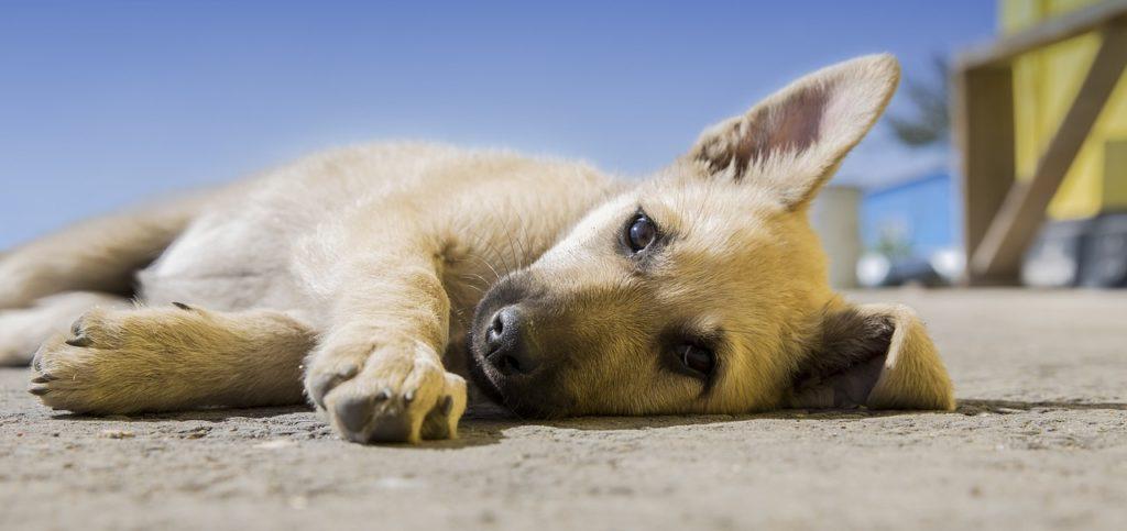 dog 918620 1280