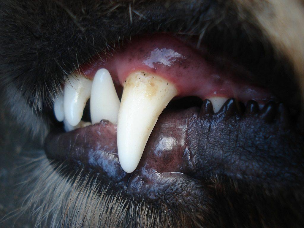 problemy z zębami psa a choroby nerek
