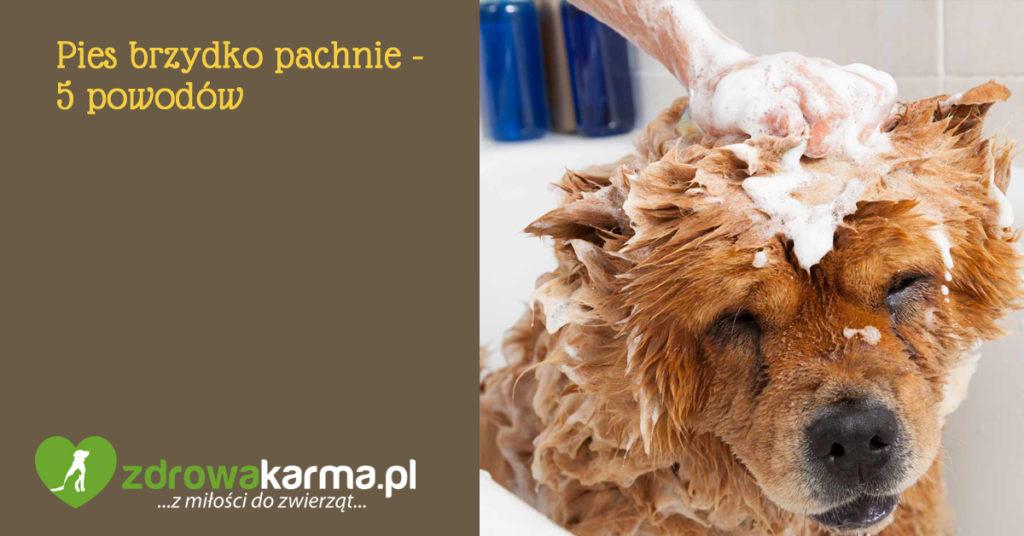 pies brzydko pachnie - 5 powodów