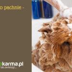Pies brzydko pachnie – 5 powodów