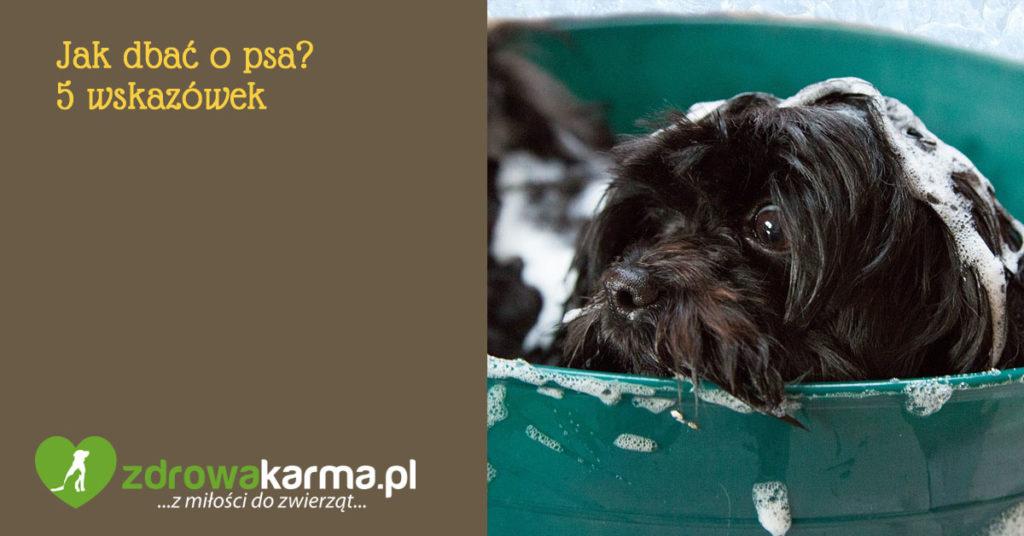 jak dbać o psa?