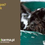 Jak dbać o psa? 5 wskazówek
