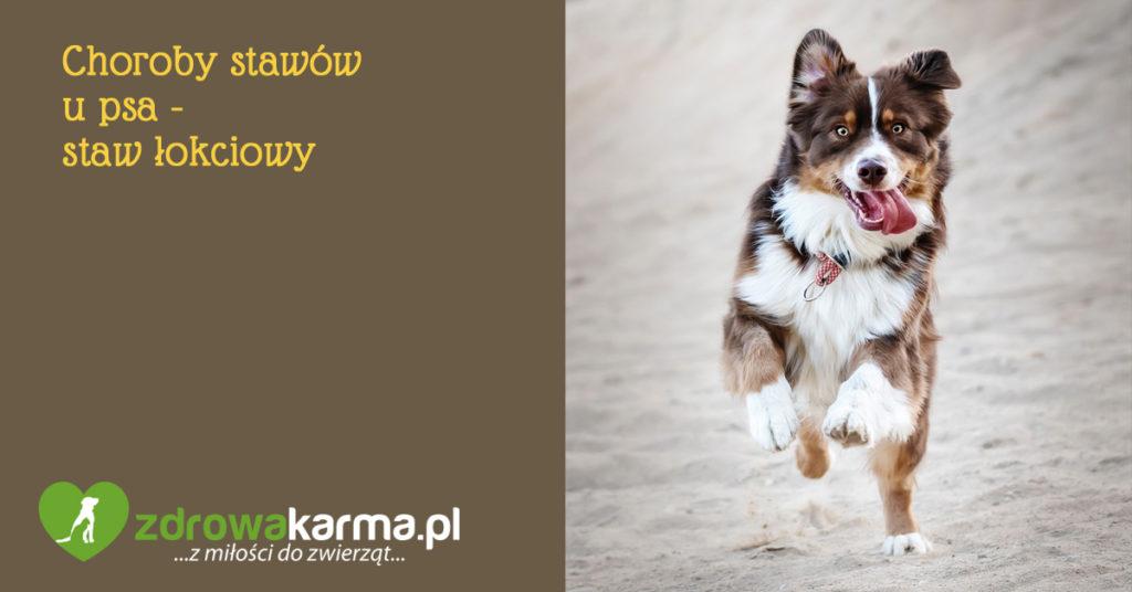 choroby stawów u psa - staw łokciowy