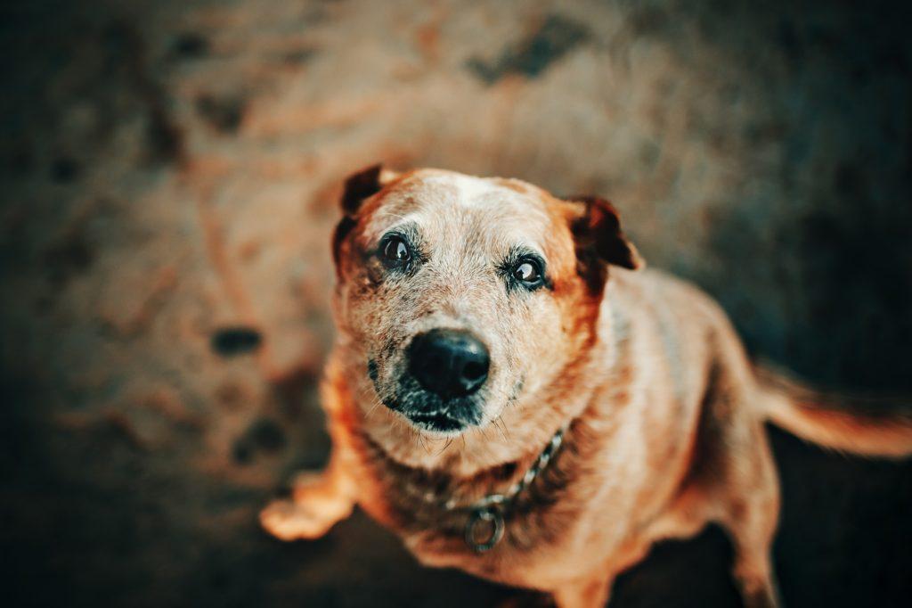 close up photo of dog 2027104