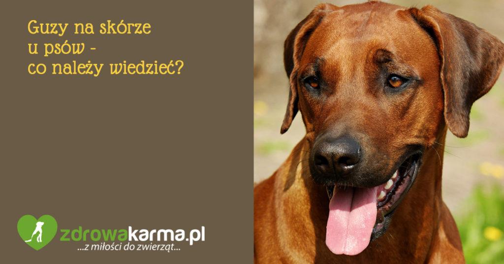 Guzy na skórze u psów - co należy wiedzieć?
