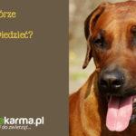 Guzy na skórze u psów – co należy wiedzieć?