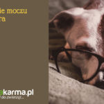 Nietrzymanie moczu u psa seniora – rozpoznanie i leczenie