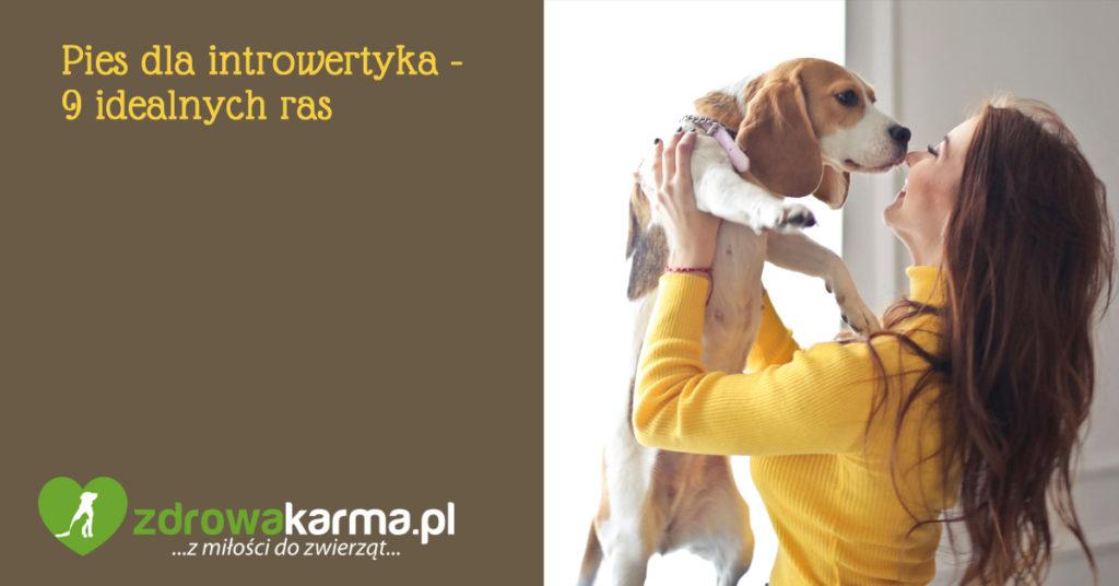 pies dla introwertyka - 9 ras