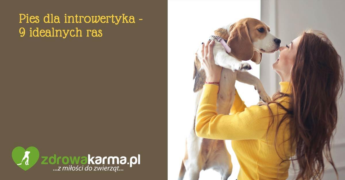 pies dla introwertyka