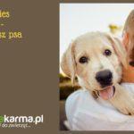 Najlepszy pies dla dziecka – zanim kupisz psa