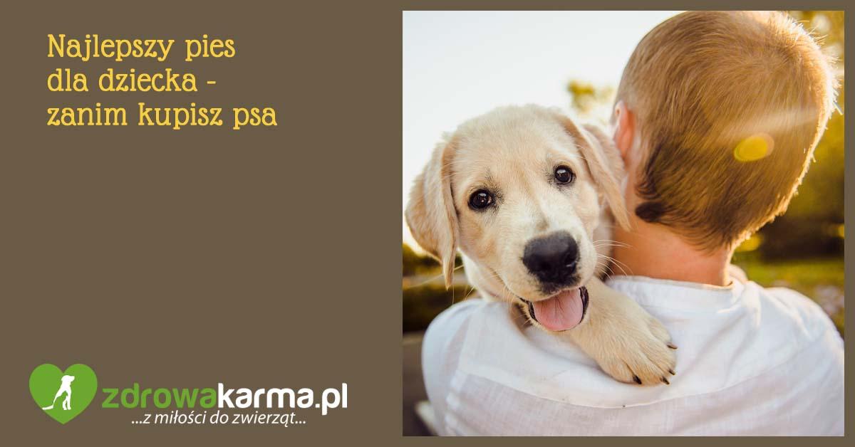 najlepszy pies dla dziecka