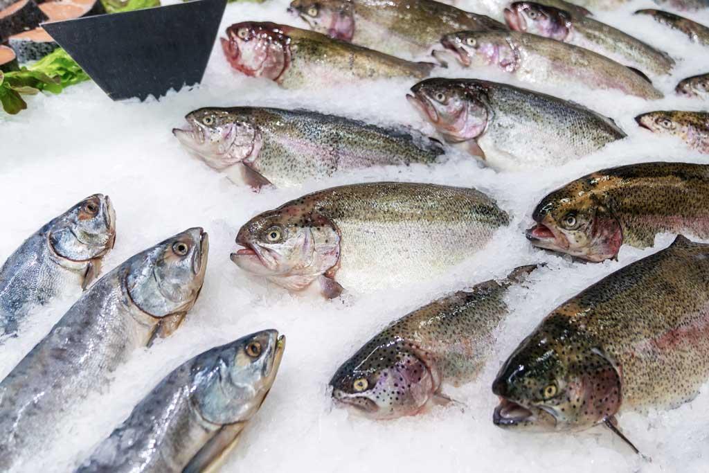 Ryba dla psa to znakomite źródło łatwo przyswajalnego białka