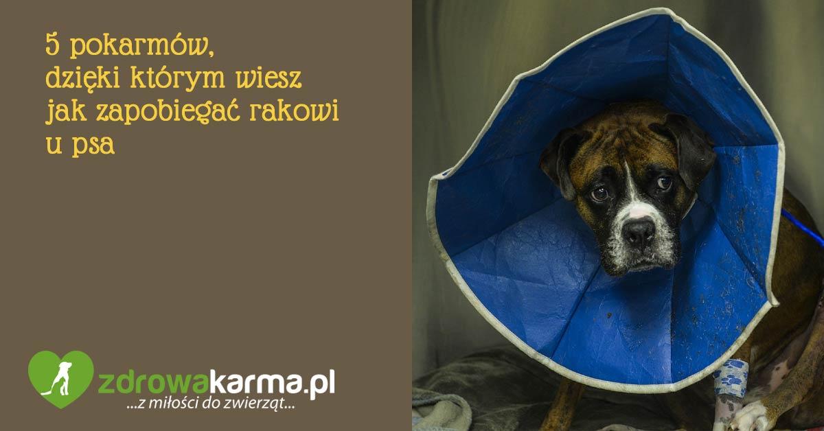 jak zapobiegac rakowi u psa