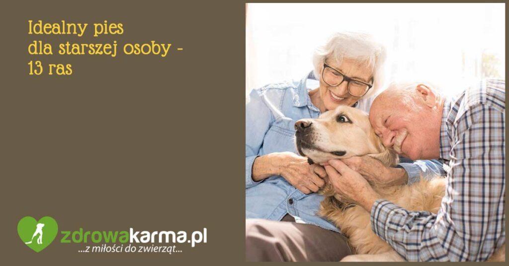 idealny pies dla starszej osoby