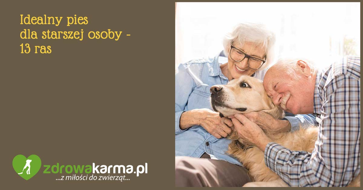 pies dla osoby starszej