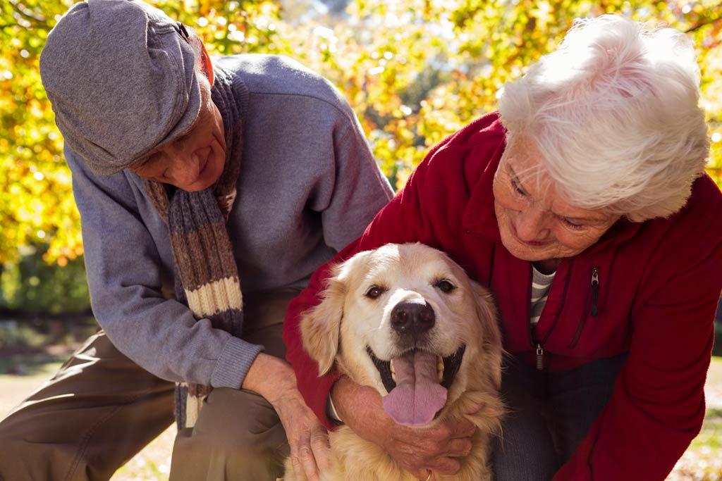 pies dla starszej osoby para