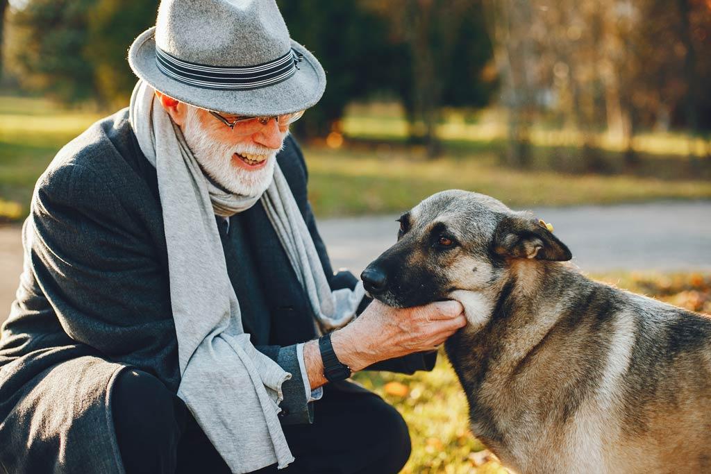 pies dla starszej osoby park