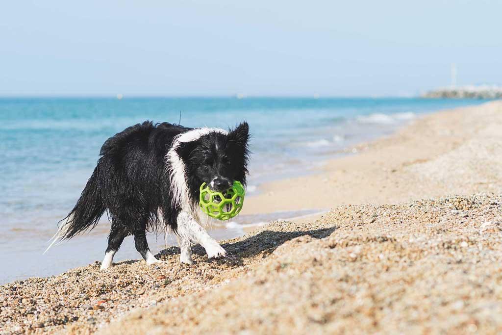 zabawy z psem w wodzie aport