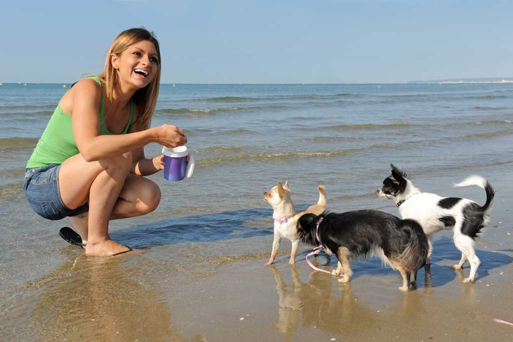 zabawy z psem w wodzie przyzwyczajanie