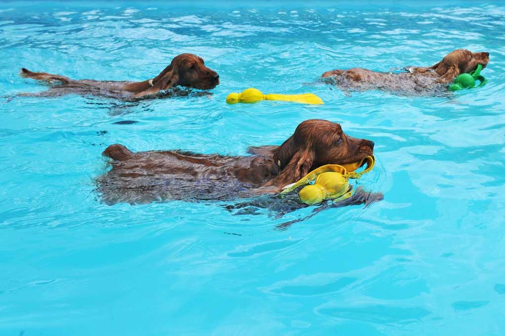 zabawy z psem w wodzie szkola pl