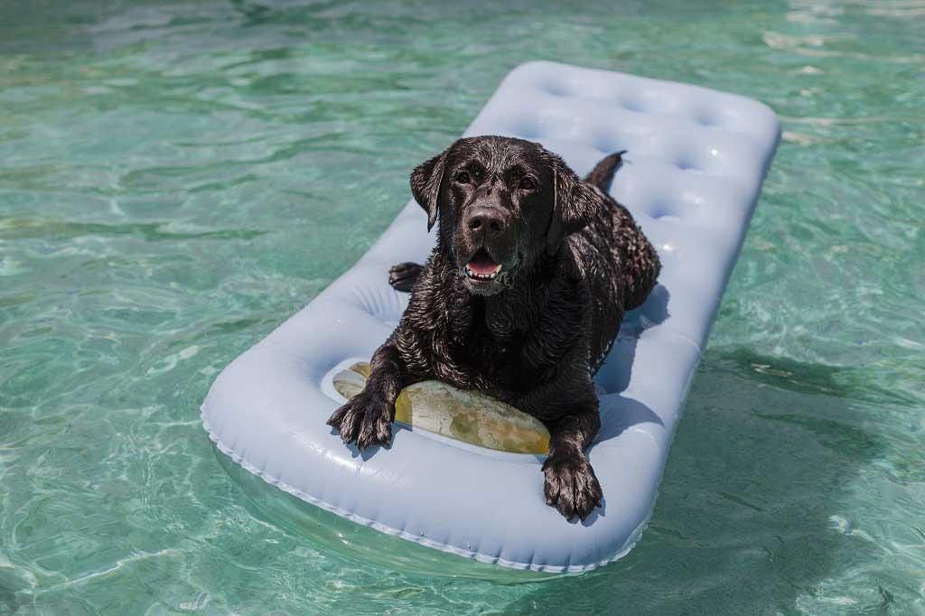 zabawy z psem w wodzie tratwa