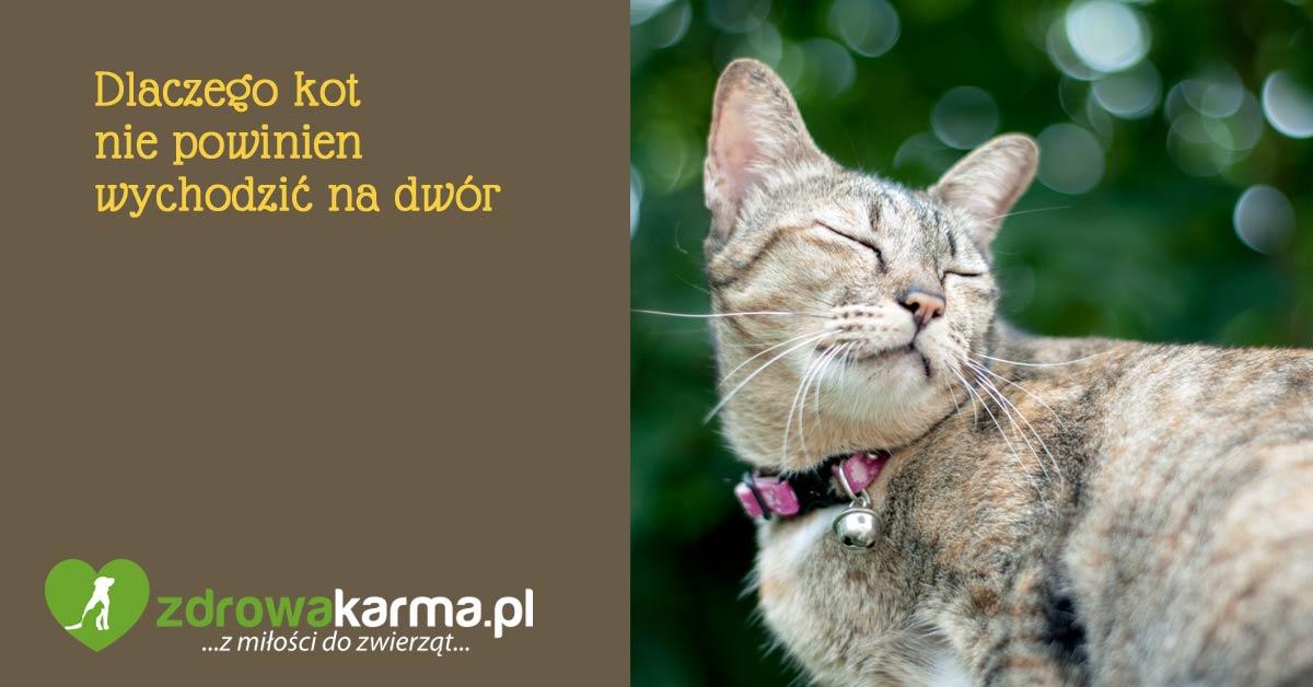 kot nie powinien wychodzić na dwór