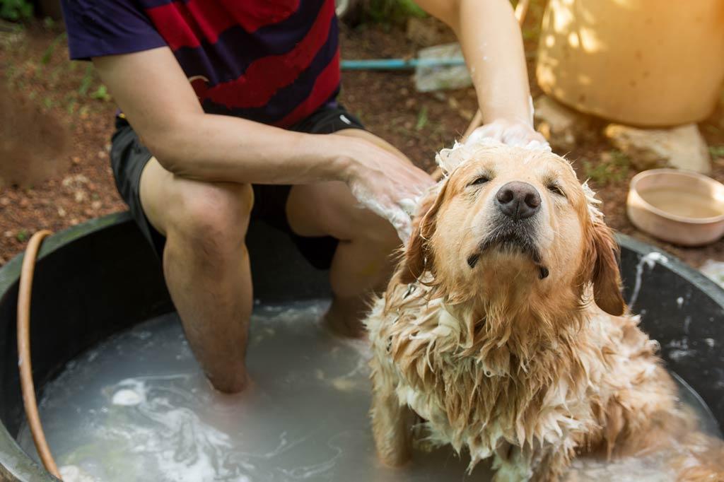 swędząca skóra u psa kąpiel owsiana