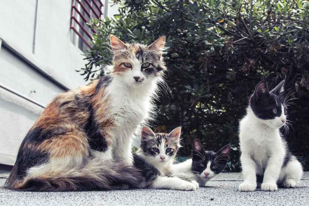 kot nie powinien wychodzic na dwor2