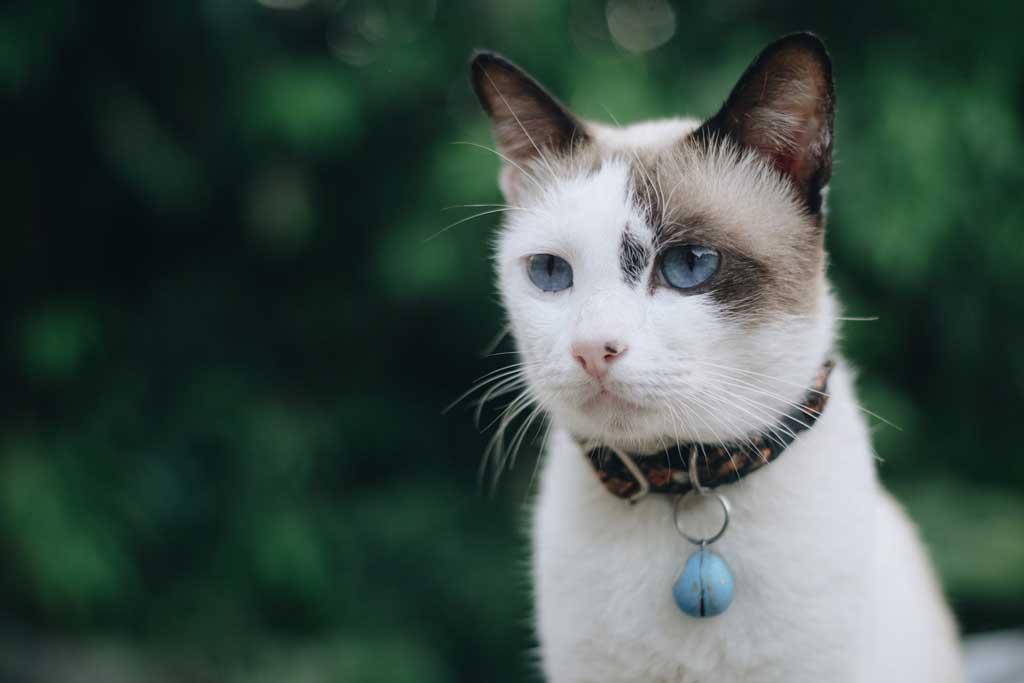 kot nie powinien wychodzic na dwor4