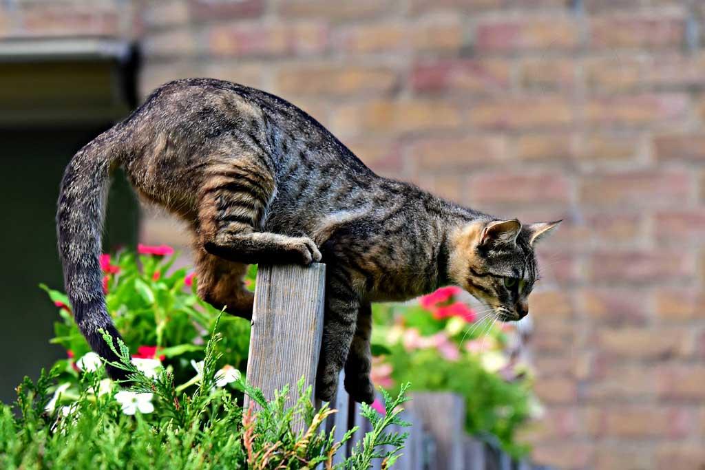 kot nie powinien wychodzic na dwor5