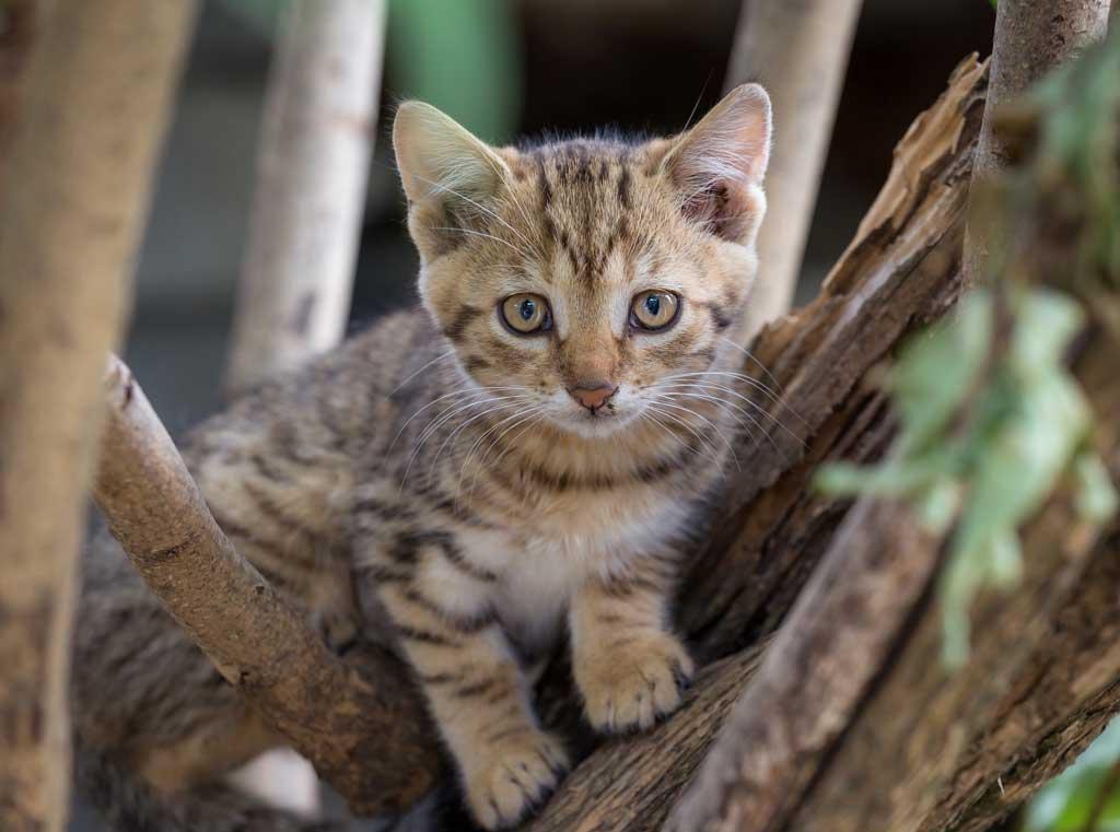 kot nie powinien wychodzic na dwor zagrozenia