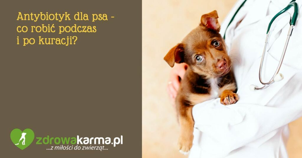 antybiotyk dla psa jak pomoc