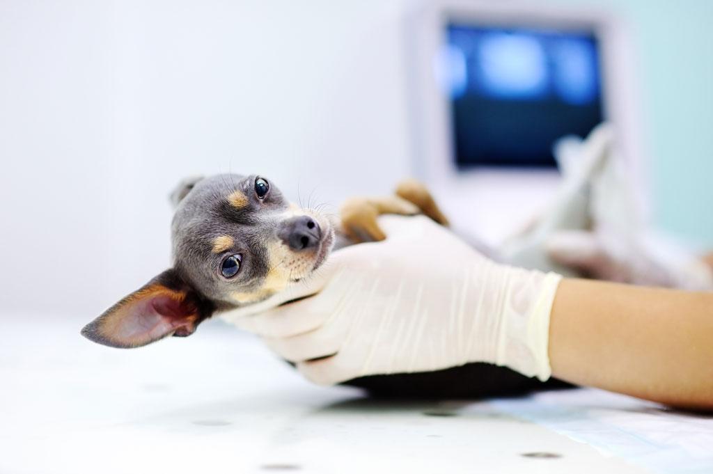 antybiotyk dla psa po badaniu