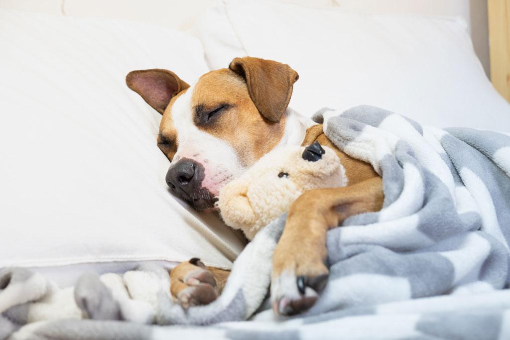 antybiotyk dla psa jest normalna praktyka
