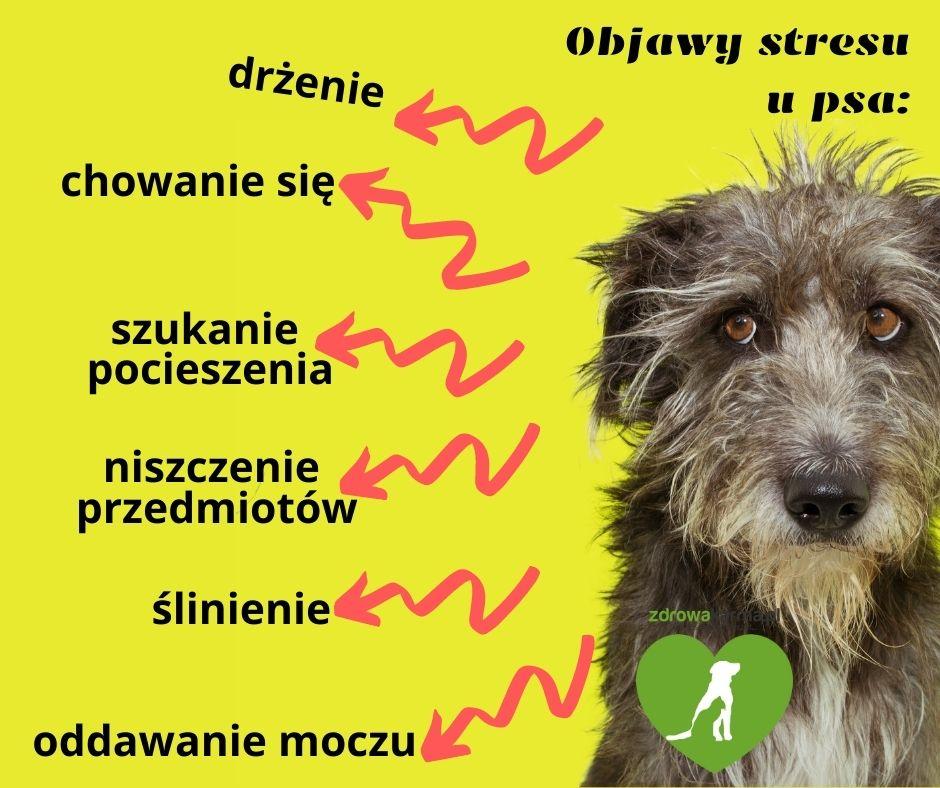 dlaczego psy się boją wystrzałów - objawy stresu