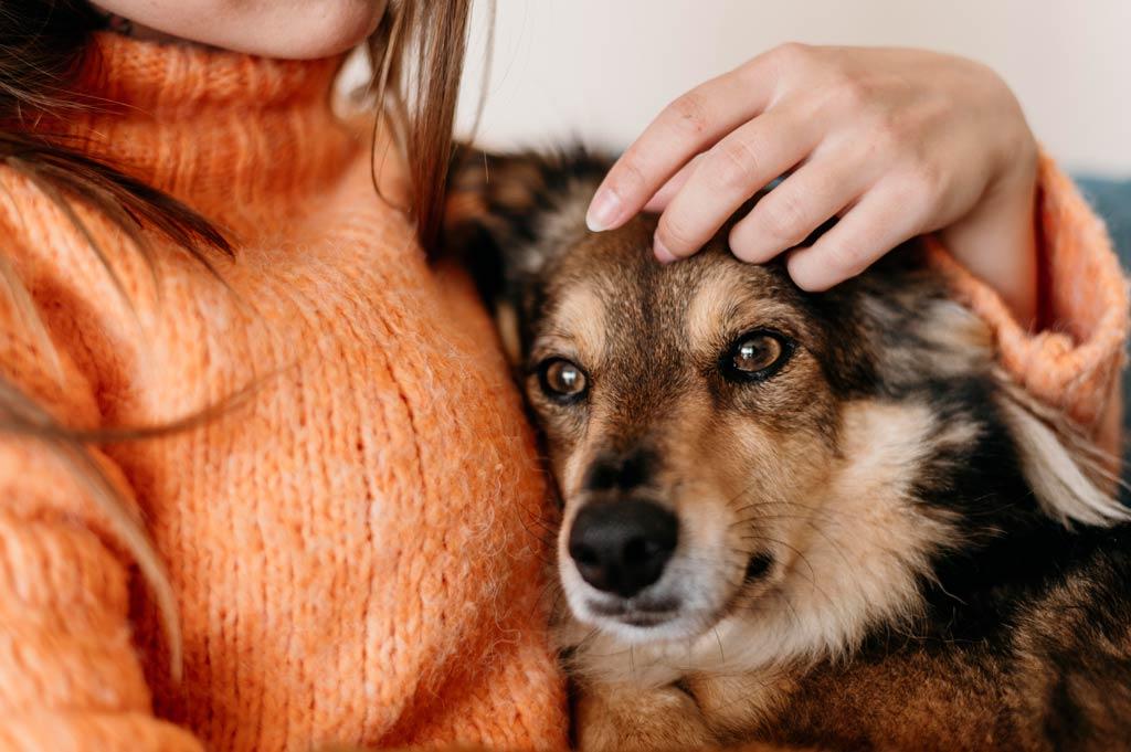 Dlaczego psy boją się wystrzałów - pocieszenie