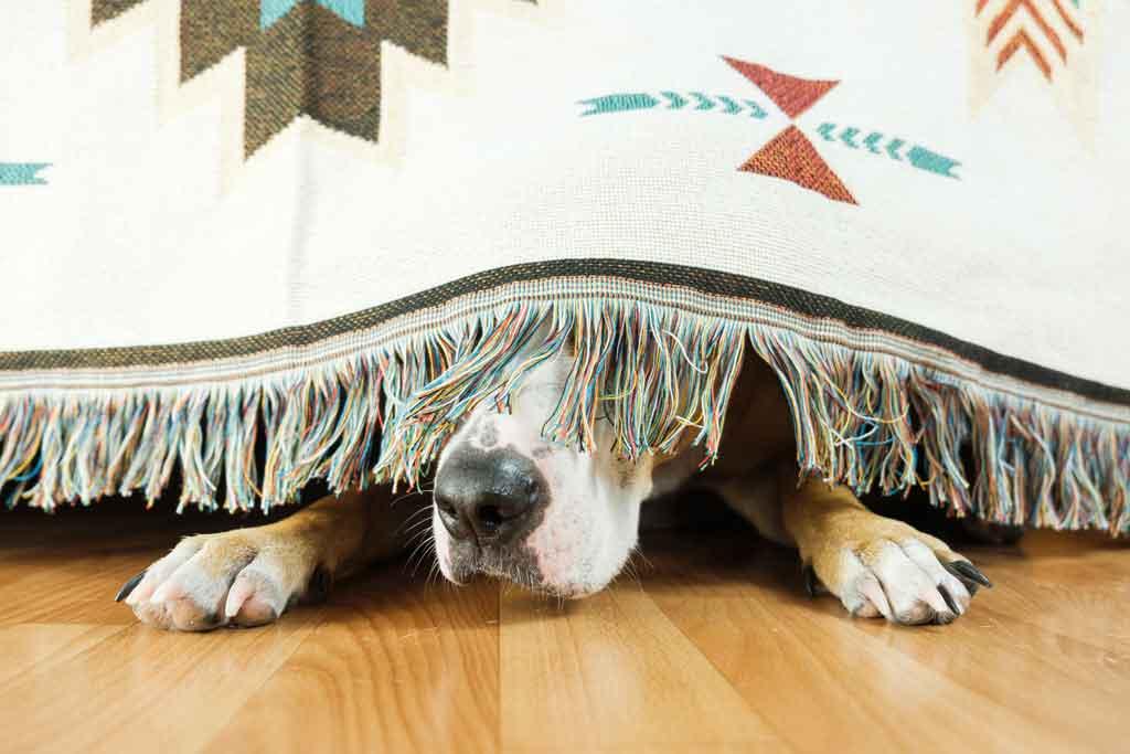 jak pomóc psu w Sylwestra?