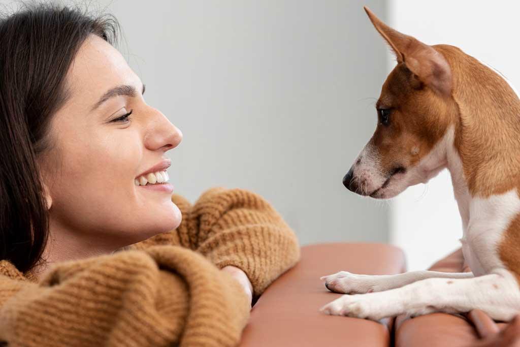 Jak pomóc psu w Sylwestra jeśli boi się fajerwerków?