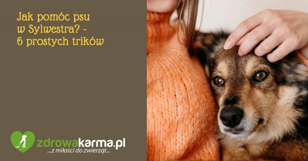 jak pomóc psu w Sylwestra - 6 prostych trików